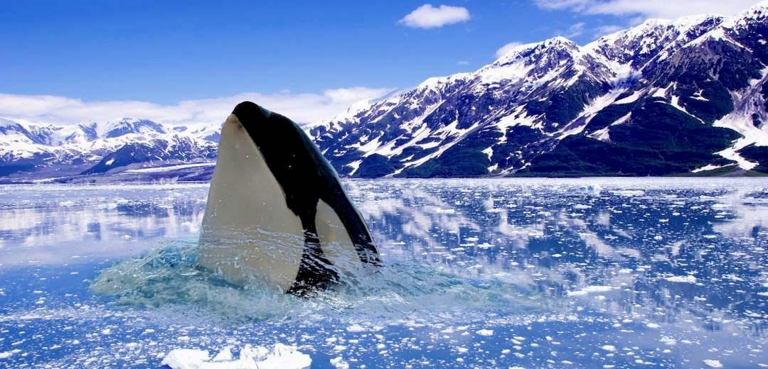 Überblick Kreuzfahrt-Arktis Nordpol